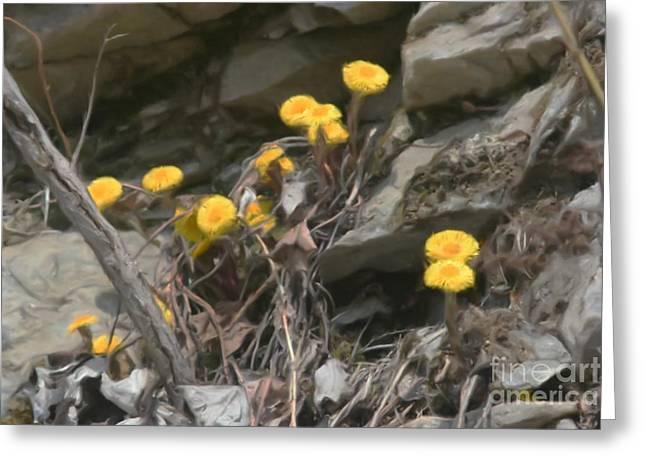 Wildflowers In Rocks Greeting Card