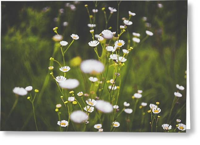 Greeting Card featuring the photograph Wildflowers In Summer by Shelby Young