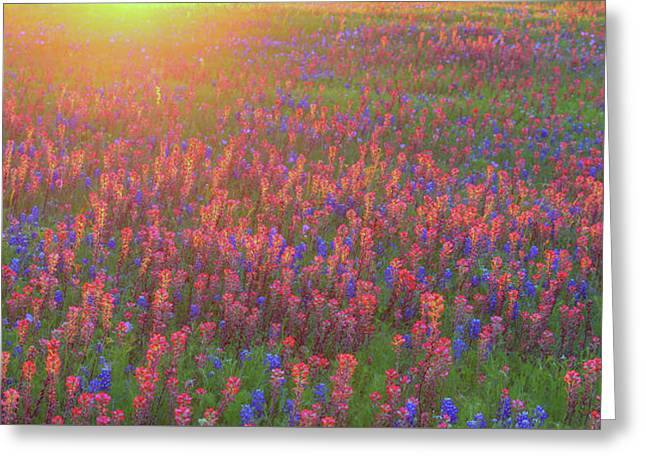 Wildflowers In Texas Greeting Card