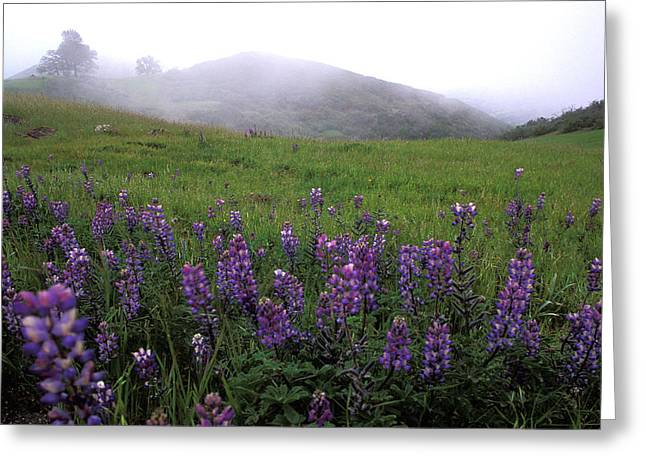 Wildflowers In The Fog Greeting Card by Kathy Yates