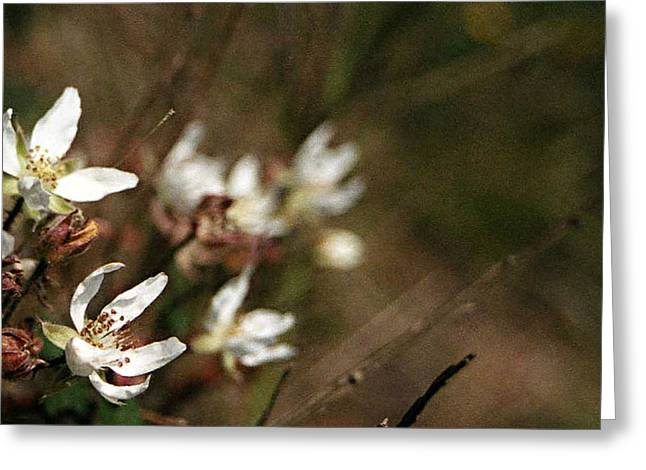 Greeting Card featuring the photograph Wildflowers by Marna Edwards Flavell