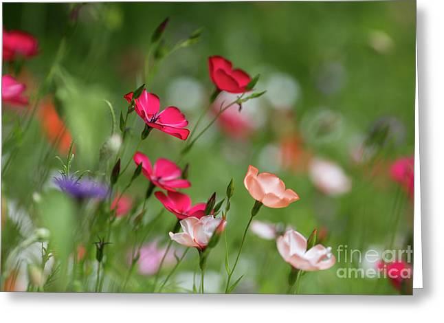 Wildflowers Meadow Greeting Card