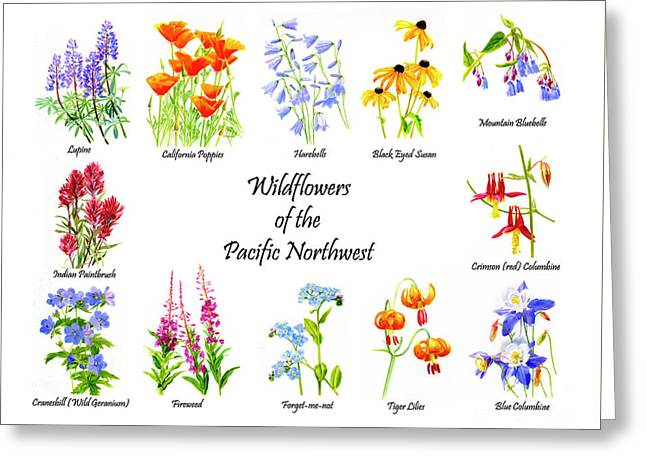 Wildflowers Of The Pacific Northwest Poster Greeting Card by Sharon Freeman