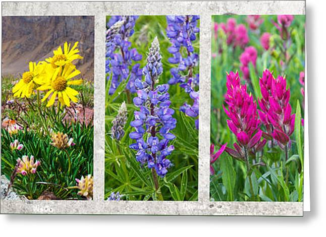 Wildflowers Of The Rocky Mountains Greeting Card