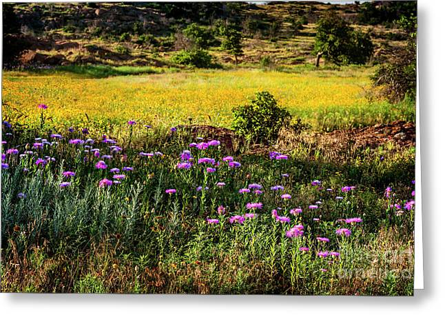 Wildflowers Of The Wichita Mountains Greeting Card by Tamyra Ayles