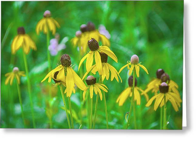 Greeting Card featuring the photograph Wildflowers Of Yellow by Bill Pevlor