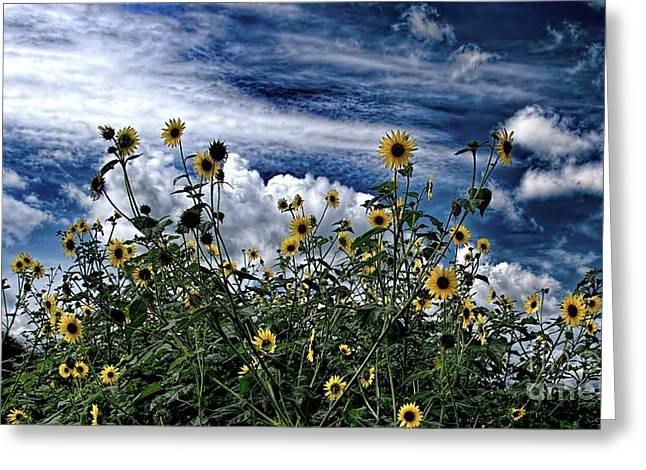 Wildflowers On The Brazos Greeting Card