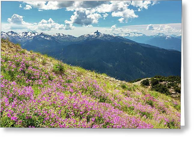 Greeting Card featuring the photograph Wildflowers On Whistler Mountain by Pierre Leclerc Photography