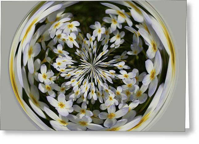 Greeting Card featuring the photograph Wildflowers Orb by Bill Barber