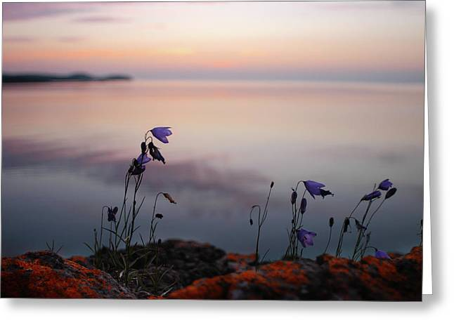 Wildflowers Over Lake Superior Greeting Card
