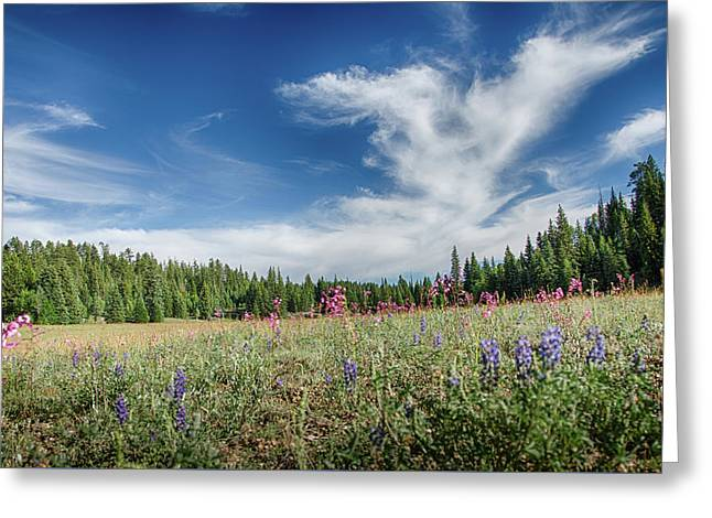 Wildflowers Reach For The Sky Greeting Card