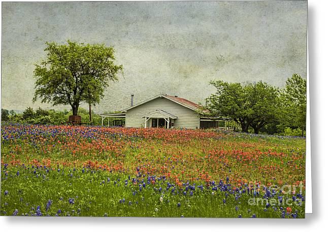 Wildflowers Texas Greeting Card by Elena Nosyreva