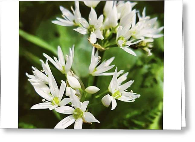 #wildgarlic #flower #woodland #walks Greeting Card by Natalie Anne