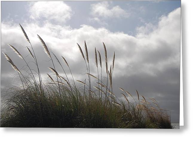 Wildgrass Greeting Card by Jean Booth