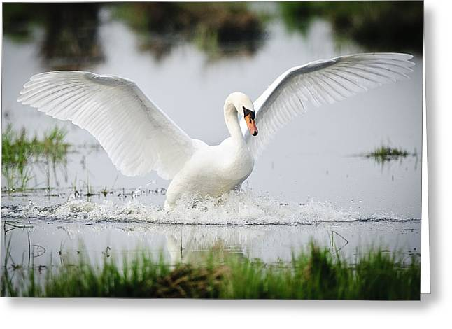 Wildlife - Landing Greeting Card by Andy-Kim Moeller