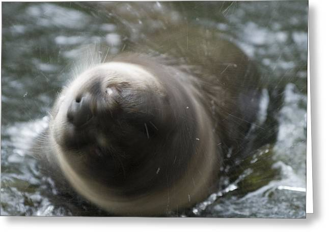 Wildlife - Rotation Greeting Card by Andy-Kim Moeller