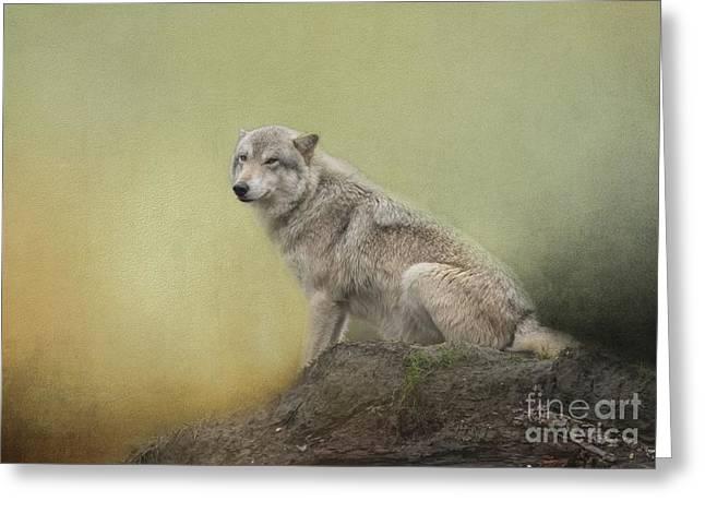 Wildlife Alaska Greeting Card