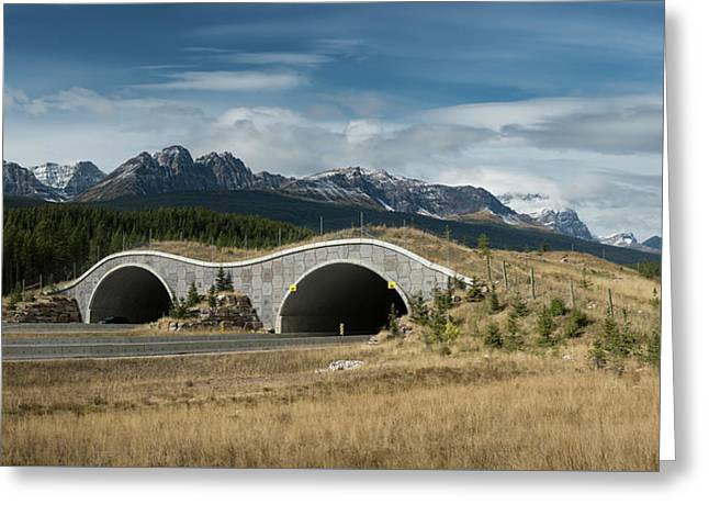 Wildlife Crossing Over The Trans Canada Highway Greeting Card