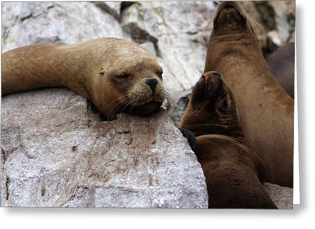 Greeting Card featuring the photograph Wildlife Of The Ballestas Islands by Aidan Moran