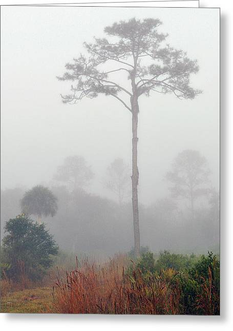 Wilds Of Myakka 007 Greeting Card