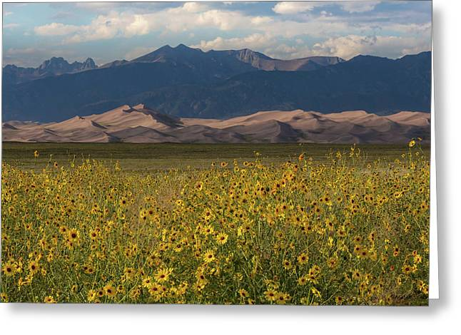 Wild Sunflowers Shine In The Grasslands Of The Great Sand Dunes N Greeting Card