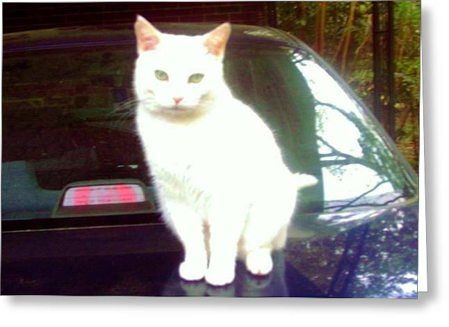 Will Wash Car For Treats Greeting Card