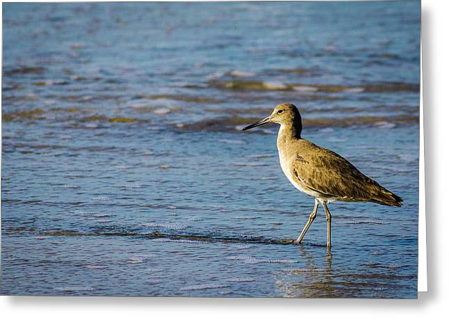 Willet 2 Greeting Card