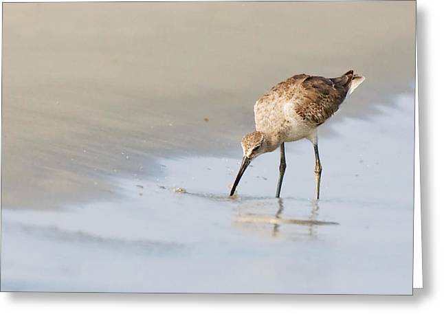Greeting Card featuring the photograph Willet On Beach by Bob Decker