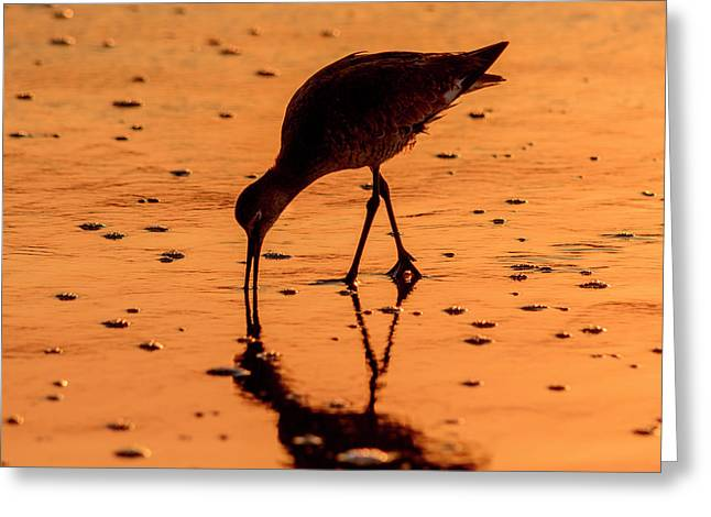 Greeting Card featuring the photograph Willet On Sunrise Surf by Steven Sparks