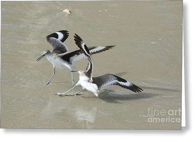 Willets At The Beach Greeting Card by Deborah Benoit
