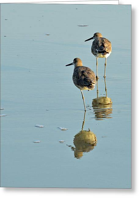Willets On Jekyll Greeting Card by Bruce Gourley