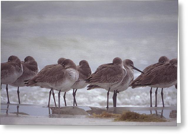 Willets  Greeting Card