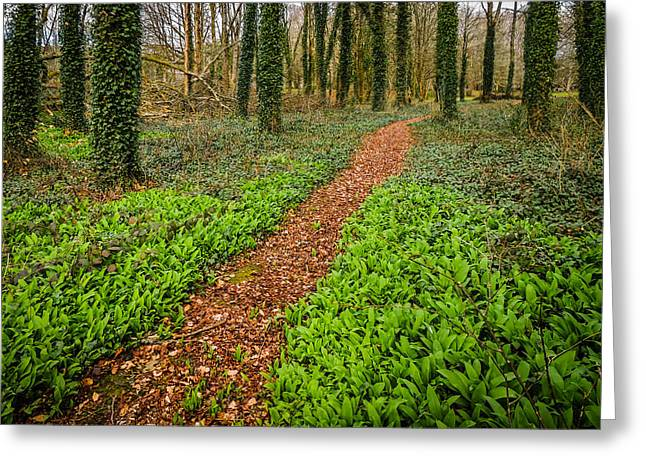 William Butler Yeats Woods Of Coole Park Greeting Card