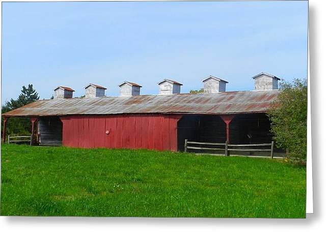 Williams Corncrib Greeting Card by Julie Dant
