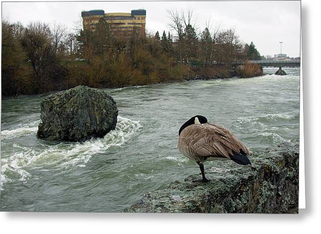 Willie Willey Rock - Riverfront Park - Spokane Greeting Card by Daniel Hagerman