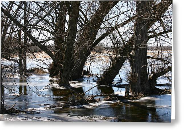 Willow Brook Greeting Card by Rick De Wolfe