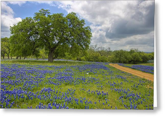 Country Pictures Greeting Cards - Willow City Loop 6 Greeting Card by Paul Huchton