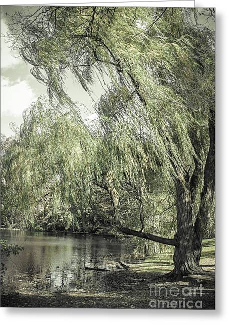 Willow Greeting Card by Colleen Kammerer