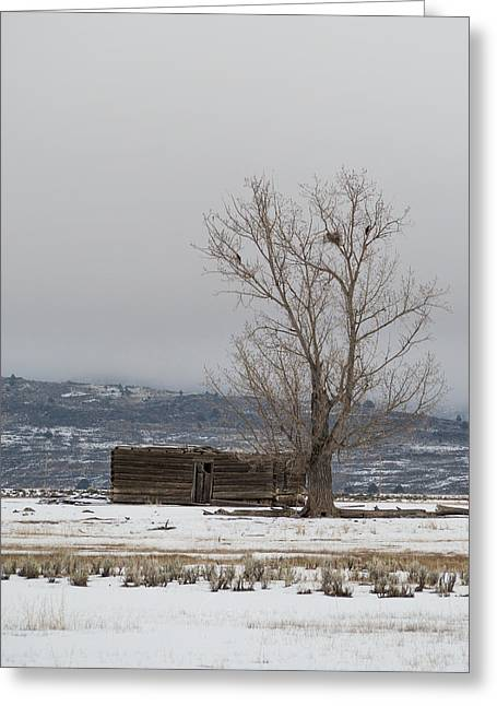 Willow Creek Cabin Greeting Card by The Couso Collection