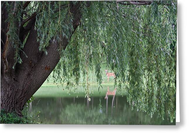 Willow Deer Greeting Card by Dylan Punke
