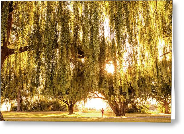 Willow Dreams Greeting Card