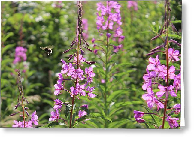 Willow Herb Greeting Card by Martin Newman