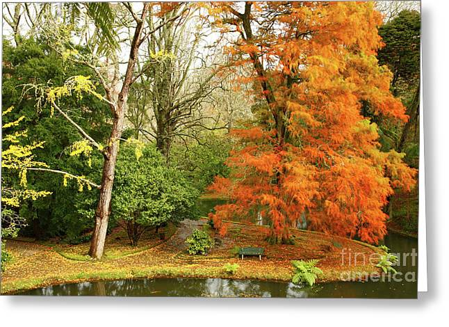 Warm Colours Greeting Cards - Willow in Autumn colors Greeting Card by Gaspar Avila