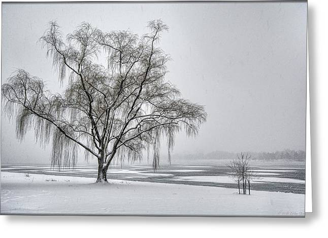 Willow In Blizzard Greeting Card