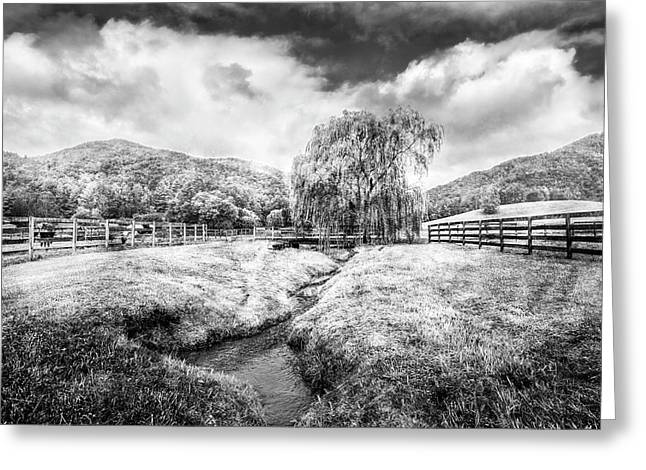 Willow In Early Autumn Black And White Greeting Card by Debra and Dave Vanderlaan