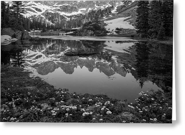 Willow Lake Black And White Greeting Card by Aaron Spong