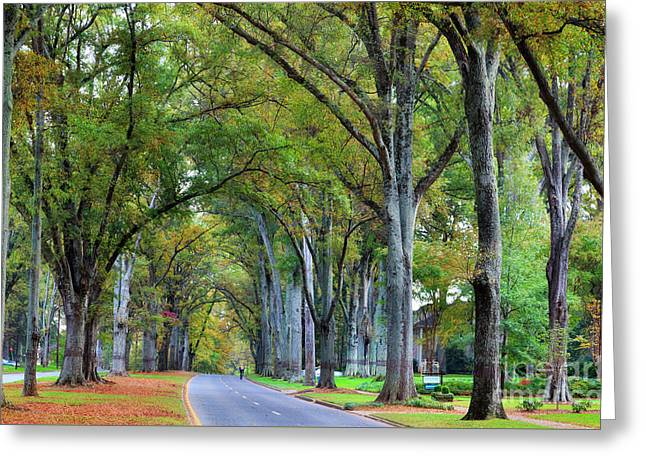 Willow Oak Trees Greeting Card
