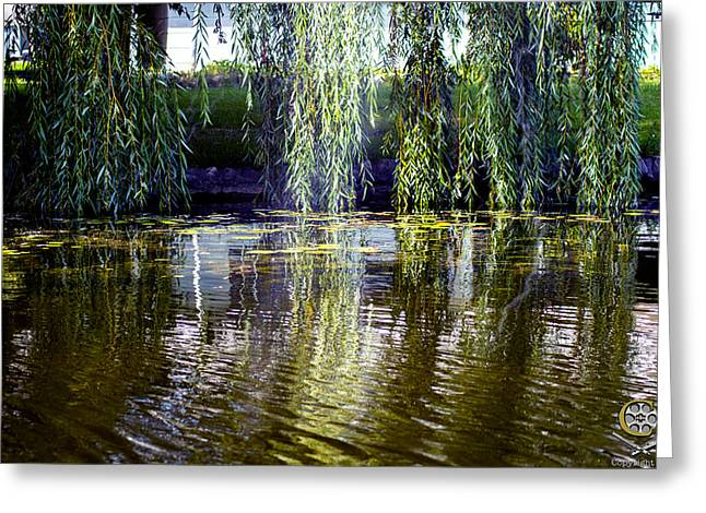 Willow On Water Greeting Card