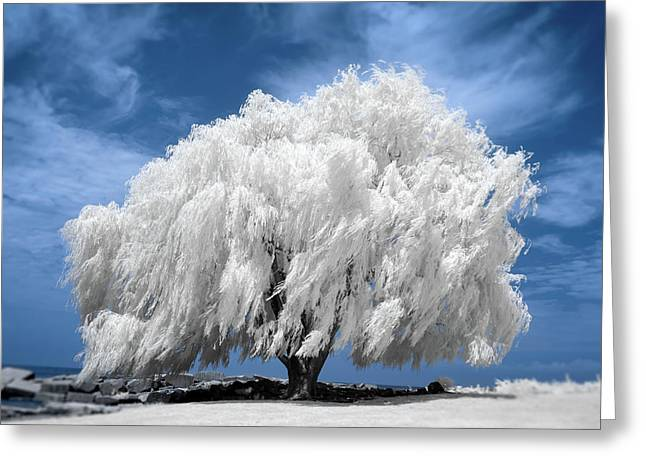 Willow tree greeting cards page 5 of 219 fine art america willow tree in infrared greeting card m4hsunfo