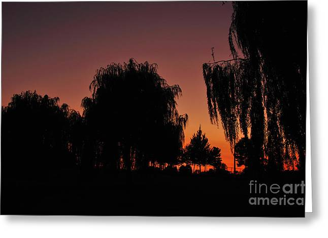 Willow Tree Silhouettes Greeting Card by Joe  Ng